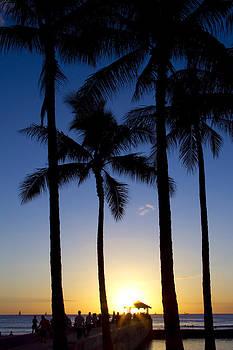 Waikiki Palms Sunset by Ashlee Meyer