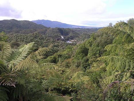 Waimangu Volcanic Valley by Olaf Christian