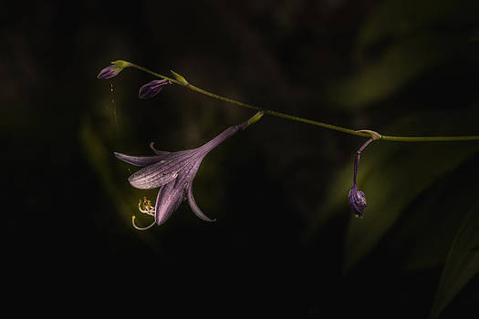 Wait For Me by Paul Barson