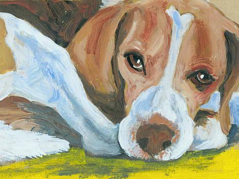 Waiting Beagle by Barbara Lightner