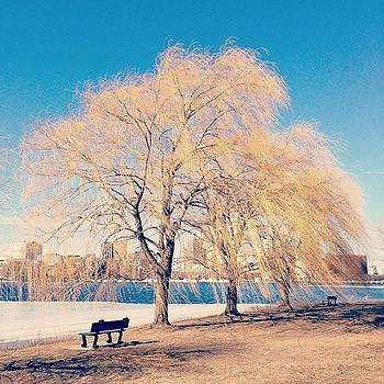 Waiting For Spring.  #charlesriver by Khamid B