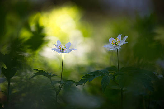 Waiting for the Light by Sarah-fiona  Helme