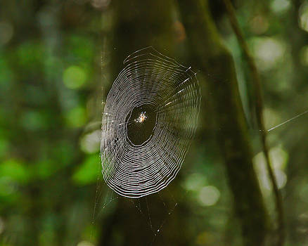 Waiting on the web by RockyBranch Dreams