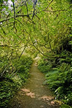 Walk in Forest by Joel Moranton