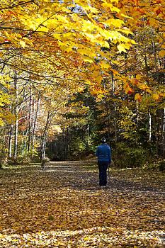 Walk Into Autumn by Allan MacDonald