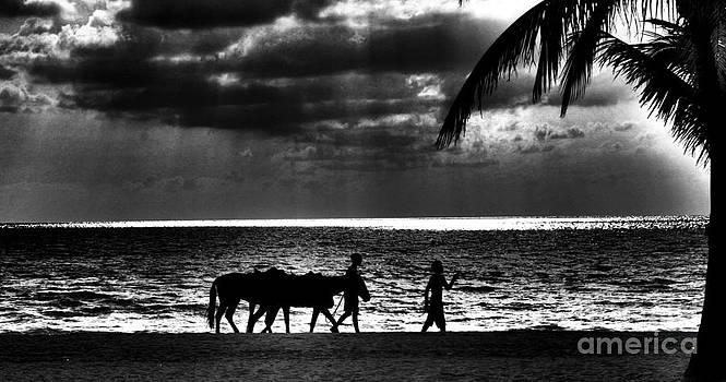 Walk Like an Egyptian by Matthew Naiden
