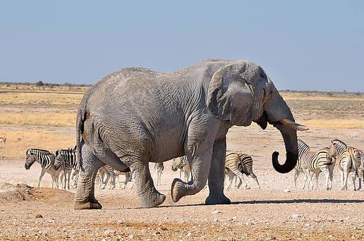 Walking Elephant by Grobler Du Preez