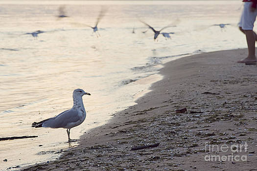 Walking On The Beach by Janique Robitaille