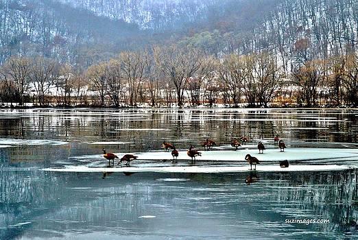 Walking on Water by Susie Loechler