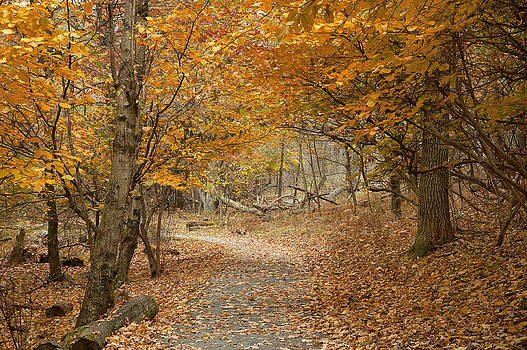 Walking the Limberlost Trail by Wayne Letsch