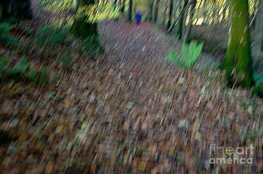 Walking through Woods by Tess Baxter