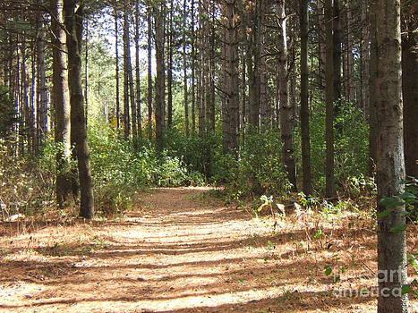 Walking Trail by Margaret McDermott