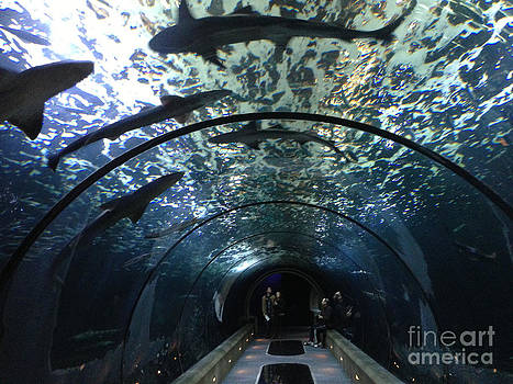 Walking With the Sharks by Bruce Smalley