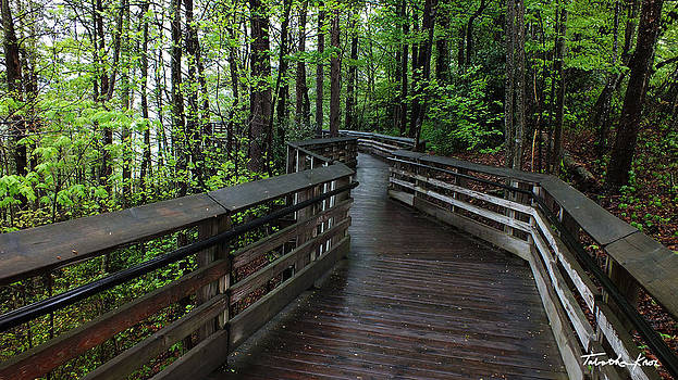 Walkway to New River Gorge with Signature  by Tabatha Knox