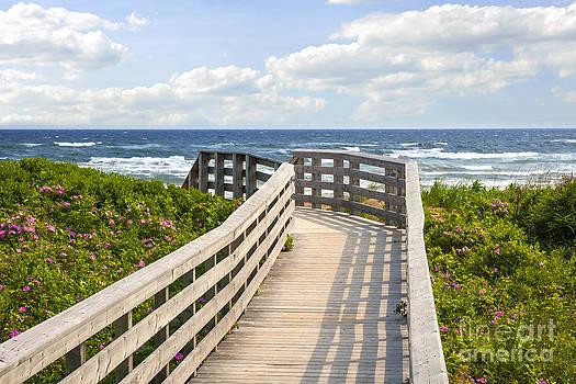 Elena Elisseeva - Walkway to ocean beach