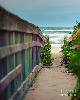 Walkway to the beach by Tammy Smith