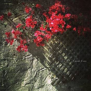 Wall Flowers by Christi Evans