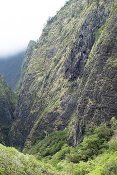 Ramunas Bruzas - Wall of Nature