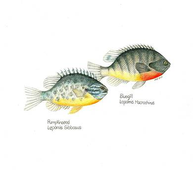 Wallace Brantley Fishing Series Bluegill and Pumpkinseed by Sharon Blanchard