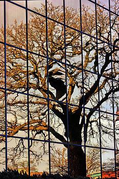 Jon Baldwin  Art - Wallace Reflection