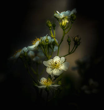 Wallflower by Paul Barson