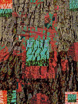 Walnut bark #1 by Marcia Cary