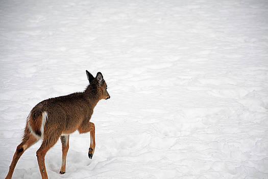 Karol Livote - Wandering Bambi