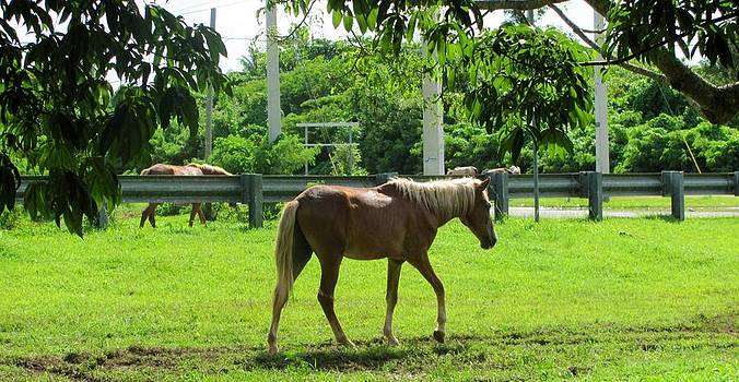 Wandering horses   by Daisy Morales