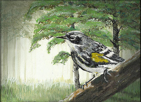 Warbler on Branch by Faye Giblin