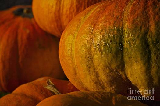 Warm Autumn Color Palette.  by  Andrzej Goszcz