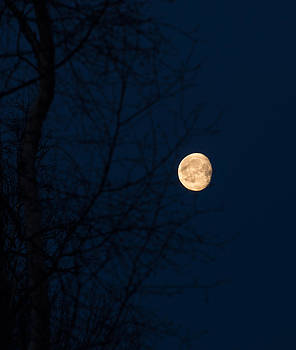 Warm Moon Through Trees by Emily Henriques