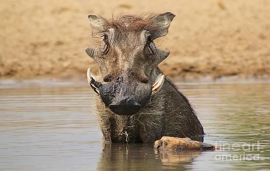 Hermanus A Alberts - Warthog - Cooling Down