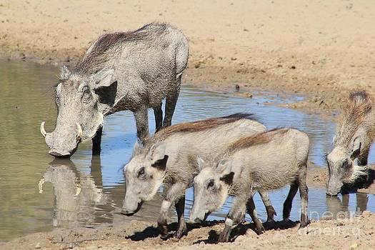 Hermanus A Alberts - Warthog Family