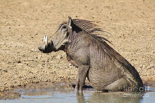 Hermanus A Alberts - Warthog Happiness