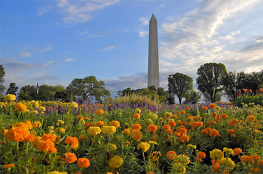 Washimgtom Monument in Spring by Michael Donahue