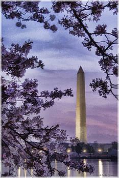 Erika Fawcett - Washington Cherry Blossoms