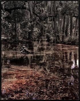 Washington Oaks by Mario Celzner