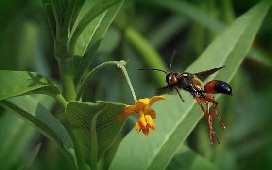 Rosanne Jordan - Wasp This