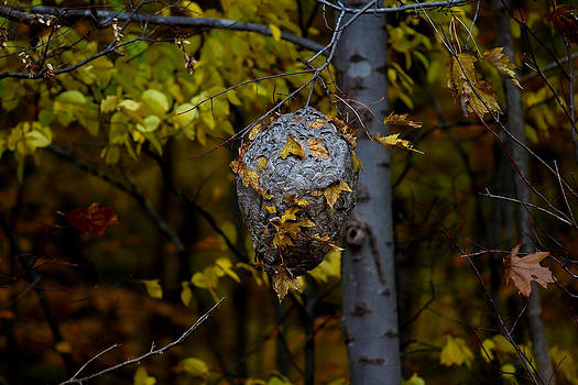 Wasp's Nest by Jerome Lynch
