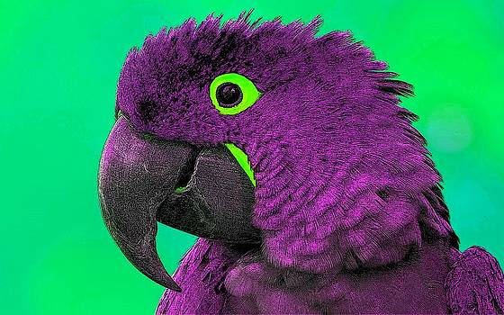 Wass Up Birdy by Kathy Budd