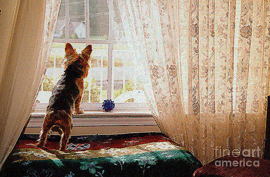 Watching for His Master by Jak of Arts Photography