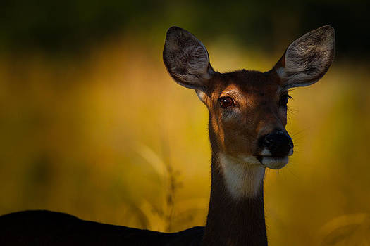 Watching From the Shadows by Howard Weitzel