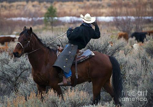 Mike  Dawson - Watching the Herd