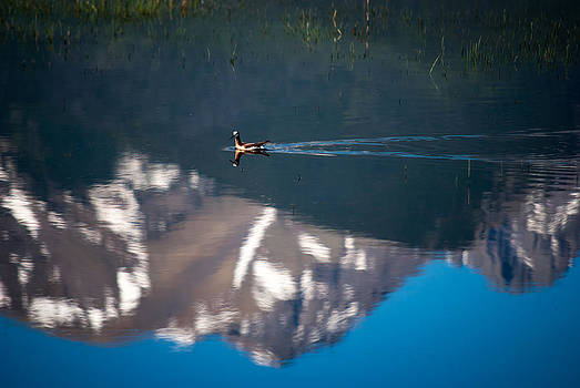 Water Bird in Mountain Pond by Shanna Lewis