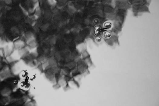 Robin Mahboeb - water bugs 2