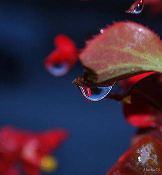 Water coloured rhapsody by Marija Djedovic