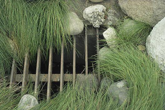 Harold E McCray - Water Drain--Yellowstone National Park