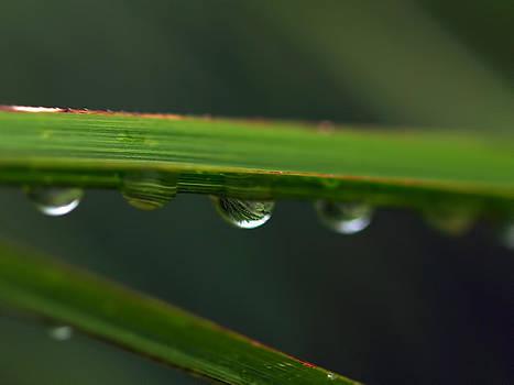 Water Drop 4 by Robert Gaughan