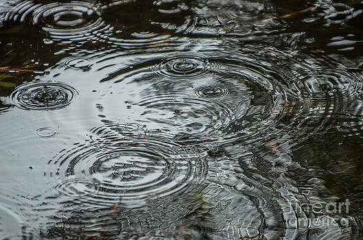 Dale Powell - Water Droplets
