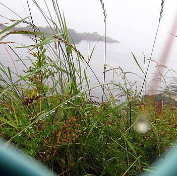 water drops of Lubec by Jen Seel